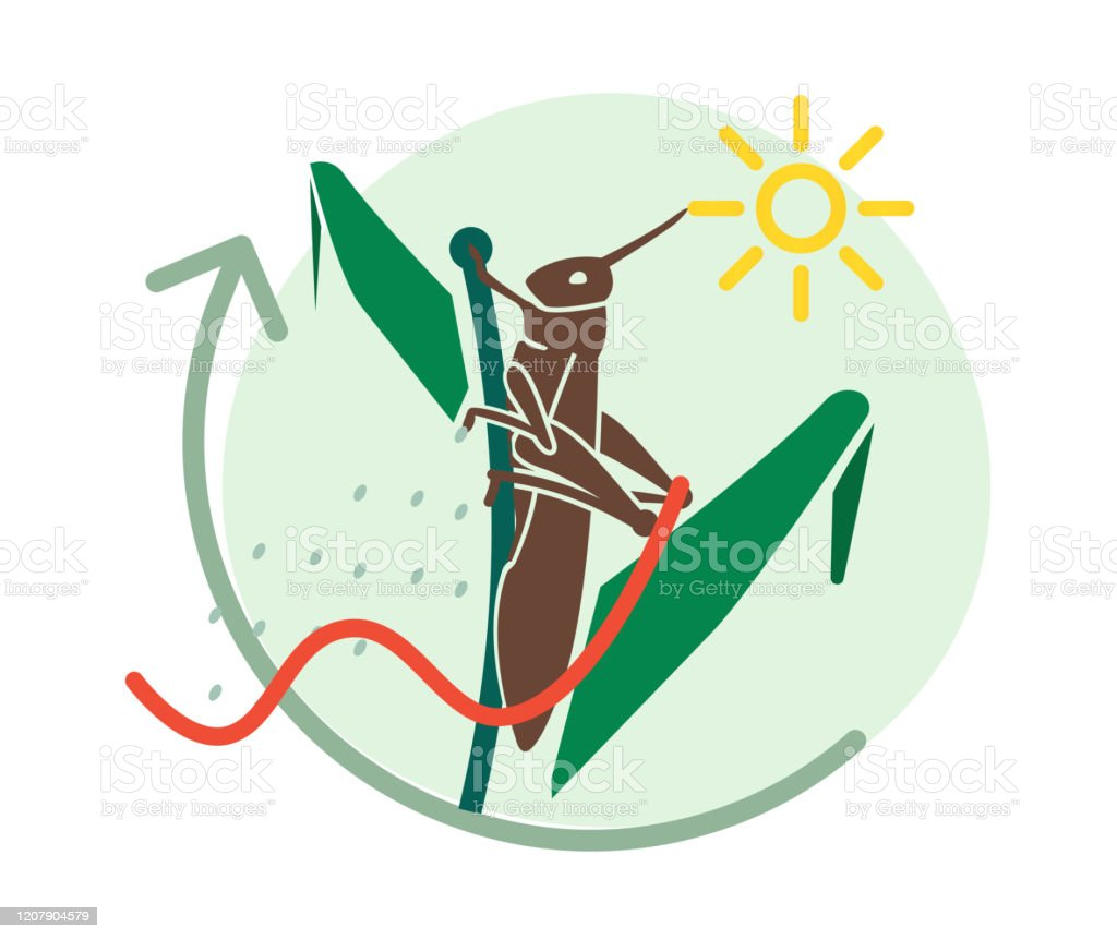 Locust Large Herbivorous Insects Attack on Crops - Icon Locust Large Herbivorous Insects Attack on Crops - Icon as EPS 10 File Acrididae stock vector
