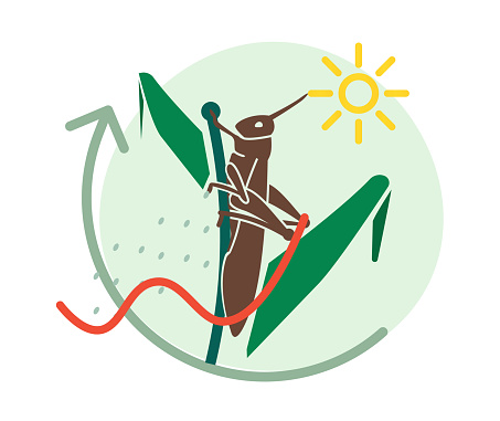 Locust Large Herbivorous Insects Attack On Crops Icon Stock Illustration - Download Image Now
