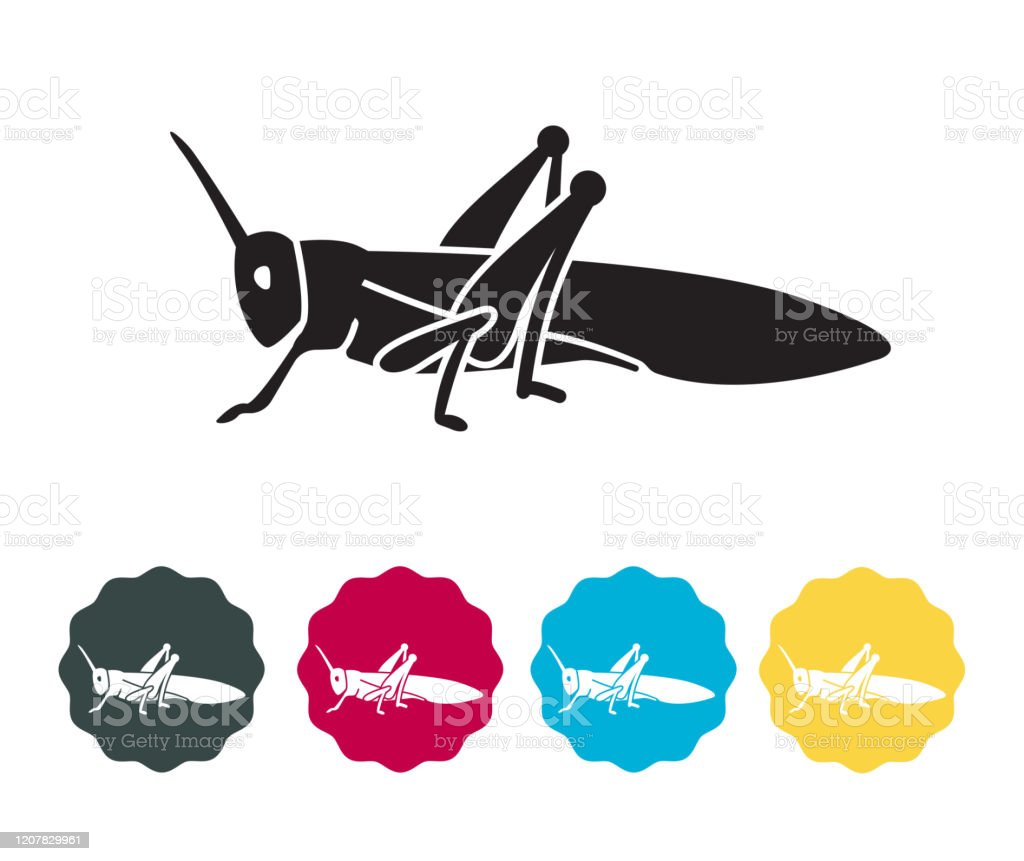 Locust Large Herbivorous Insects - Icon Locust Large Herbivorous Insects - Icon as EPS 10 File Acrididae stock vector