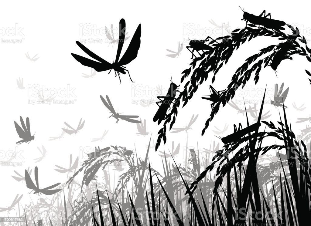 Locusts on rice vector art illustration