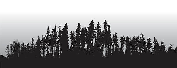 Lodge Pole Pines Treeline A vector silhouette illustration of a tree line of a dense forest of pine trees with a grey sky in behind. treelined stock illustrations