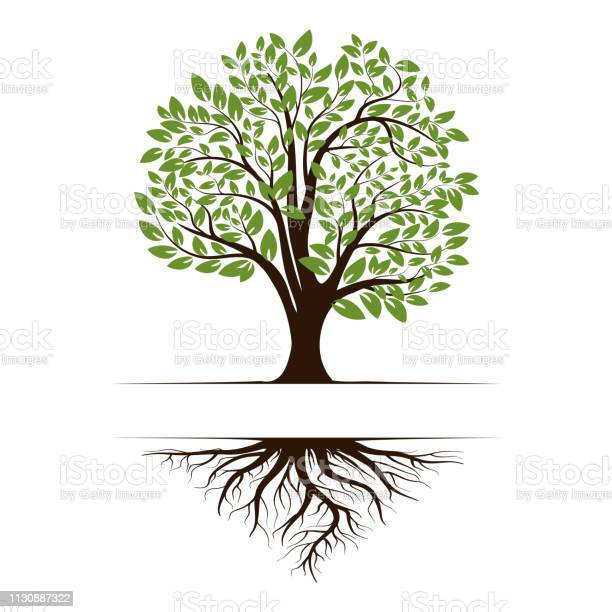 Logo of a green life tree with roots and leaves vector illustration vector id1130887322?b=1&k=6&m=1130887322&s=612x612&h= zjasi6rtrxsv1pjbukas5k8axn0inc70bviuxjgpky=
