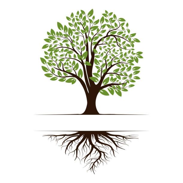 ilustraciones, imágenes clip art, dibujos animados e iconos de stock de logotipo de un árbol de vida verde con raíces y hojas. icono de ilustración vectorial aislado sobre fondo blanco. - árbol