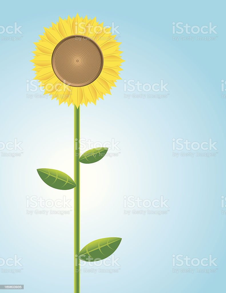Lone sunflower royalty-free lone sunflower stock vector art & more images of blue