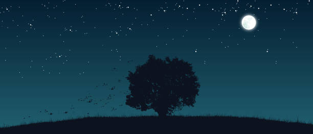 lonely tree on the field - dusk stock illustrations