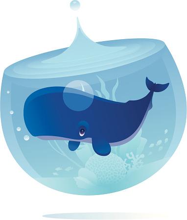 Lonely Whale-vektorgrafik och fler bilder på Akvarium - Husdjurstillbehör