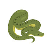 Long big green snake boig. Rare wild animal south america. Teaching card. Zoo, natural concept