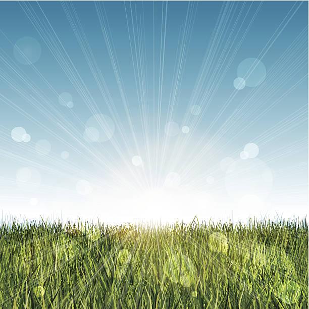 ロング芝生の景色、ブルーの空とレンズフレア - 草原点のイラスト素材/クリップアート素材/マンガ素材/アイコン素材