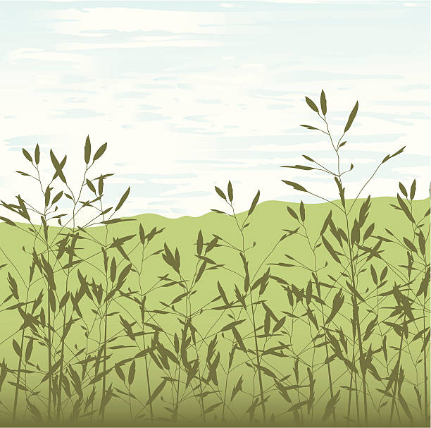 Long Grasses and sky - peaceful background vector art illustration
