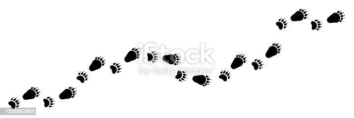 Paw vector foot trail print of bear. Teddy bear silhouette animal diagonal tracks for t-shirts, backgrounds, patterns, design, greeting cards, child prints and etc. It's brush, draw any tracks.