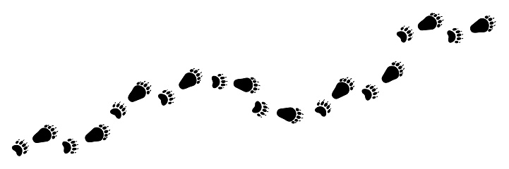 Long vector bear foot trail, track.