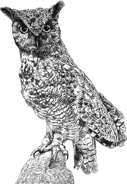 long-eared owl - great horned owl stock illustrations, clip art, cartoons, & icons