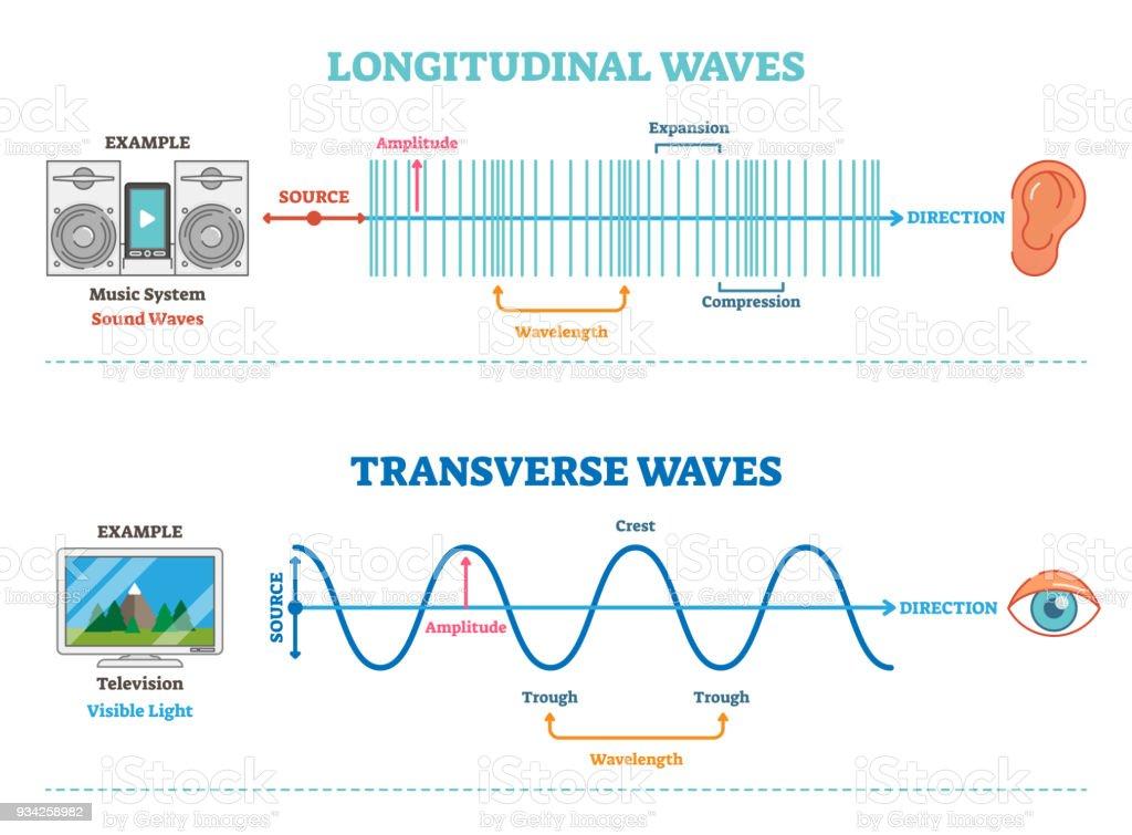 Longitudinal and Transverse wave type, vector illustration scientific diagram. Sonic and visual perception principle. vector art illustration