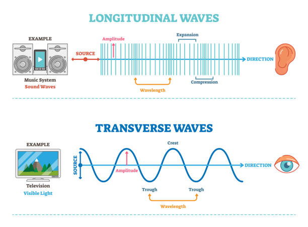Longitudinal and Transverse wave type, vector illustration scientific diagram. Sonic and visual perception principle. Longitudinal and Transverse wave type, vector illustration scientific diagram with wave structure and difference. Sonic and visual perception principle. longitude stock illustrations