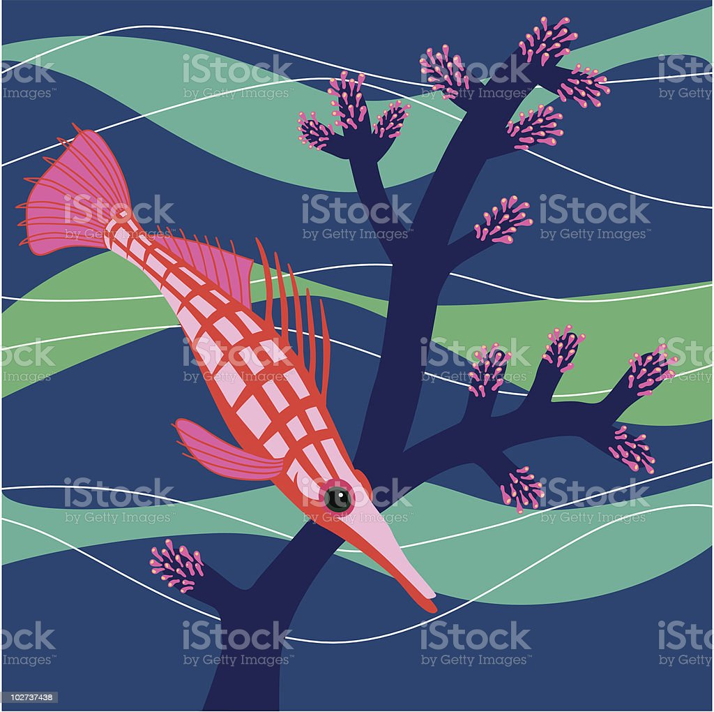 Longnose Hawkfish vector art illustration