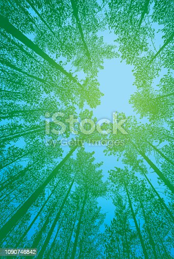 Stipple illustration Looking up at pine forest with fisheye lens