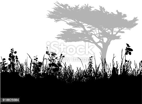 Landscape of a single tree viewed from a grassy field