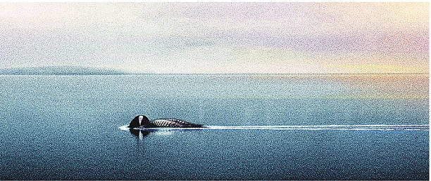 Loon And Lake Superior Stipple illustration of a common loon fishing on Lake Superior. Nice wide format with lots of cropping options. loon bird stock illustrations