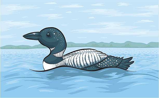 Loon A loon on a lake. Colour & strokes on separate layers. loon bird stock illustrations