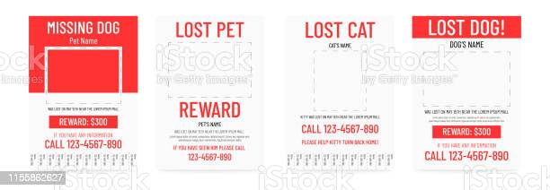 Lost pet poster template missing banner design vector id1155862627?b=1&k=6&m=1155862627&s=612x612&h=wyj62mw8fsfi1eb68txlm9aseceupv9k0ktnmgrbag0=