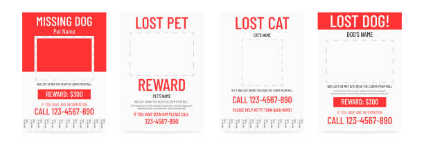 lost pet poster template. missing banner design. - lost stock illustrations