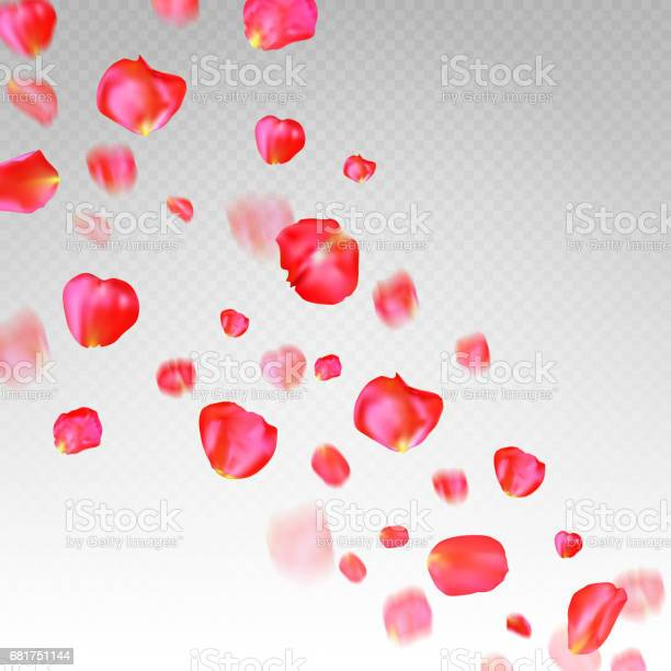 Lot of falling red rose petals on transparent background vector id681751144?b=1&k=6&m=681751144&s=612x612&h=w jaahajp89 bevnv3 yylqp1ziqzxvpy0wuqp1zyjy=