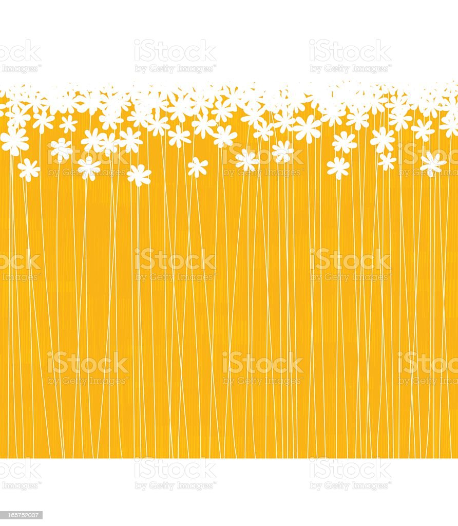 A lot of white flowers in a orange field vector art illustration