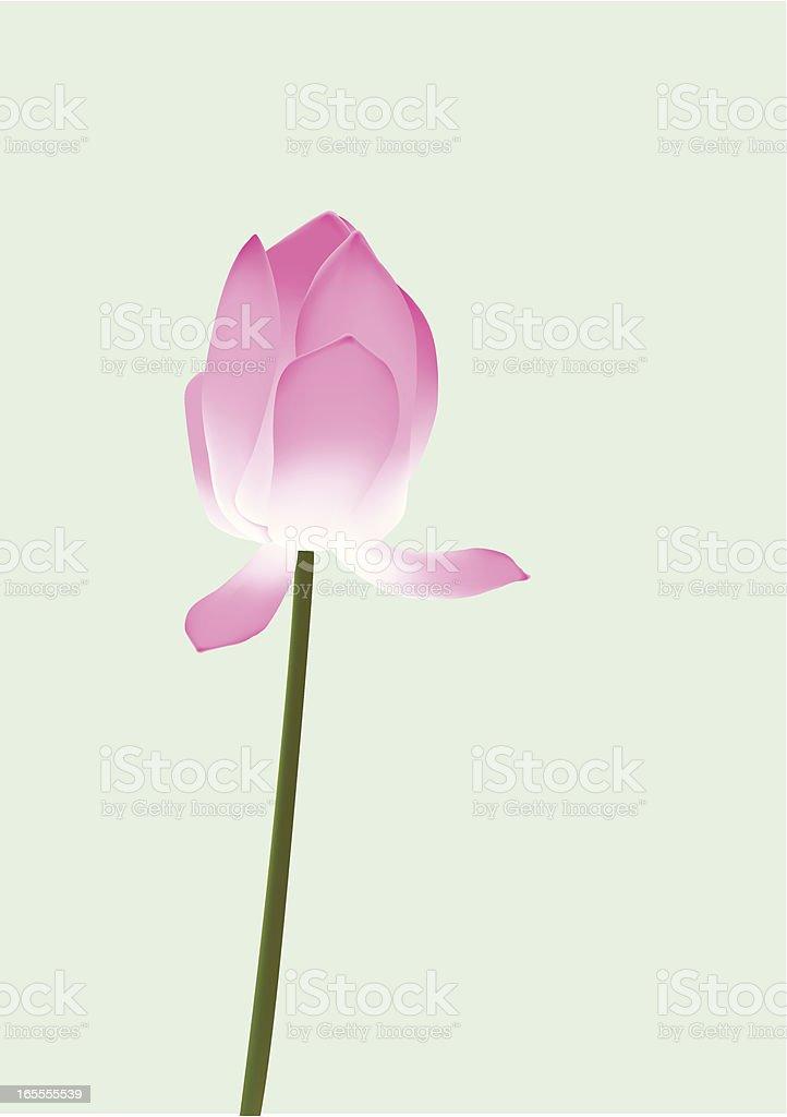 Lotus Bud royalty-free stock vector art