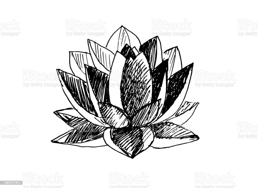 Fleur De Lotus Noir Et Blanc Vecteurs Libres De Droits Et