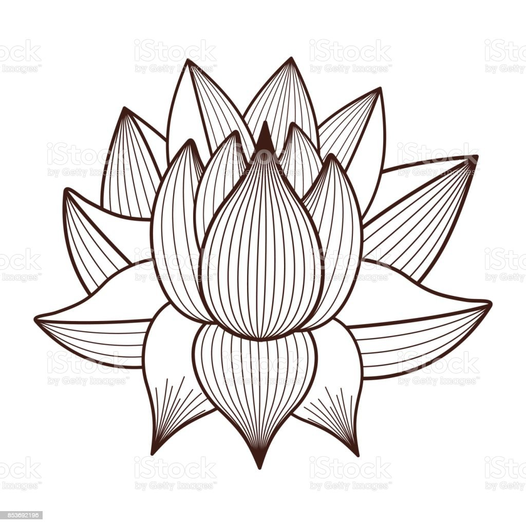 Lotus Flower Drawing Isolated Icon Design Stock Vector Art More