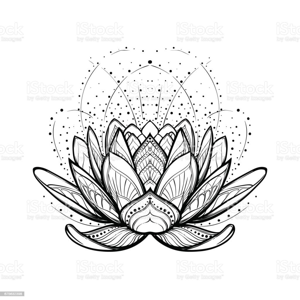 Lotus Flower Intricate Stylized Linear Drawing Isolated On White Background Royalty Free