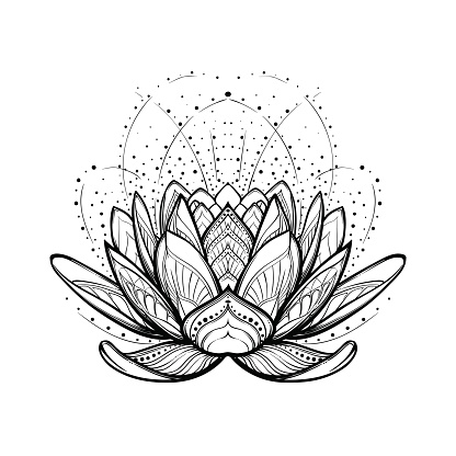 Lotus flower. Intricate stylized linear drawing isolated on white background.