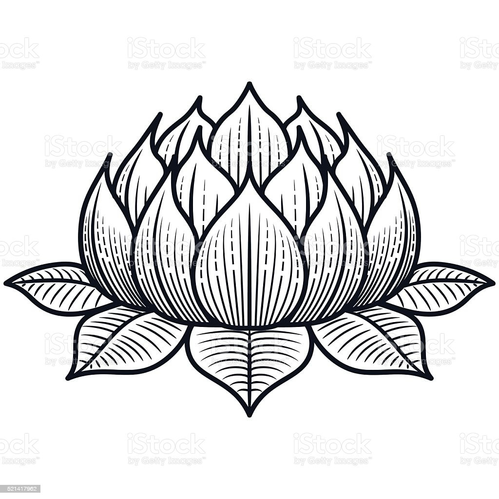 Lotus Flower Line Drawing Vector Free Download : Lotus flower silhouette illustration vector stock
