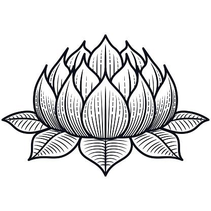 Lotus Flower Silhouette Illustration - VECTOR