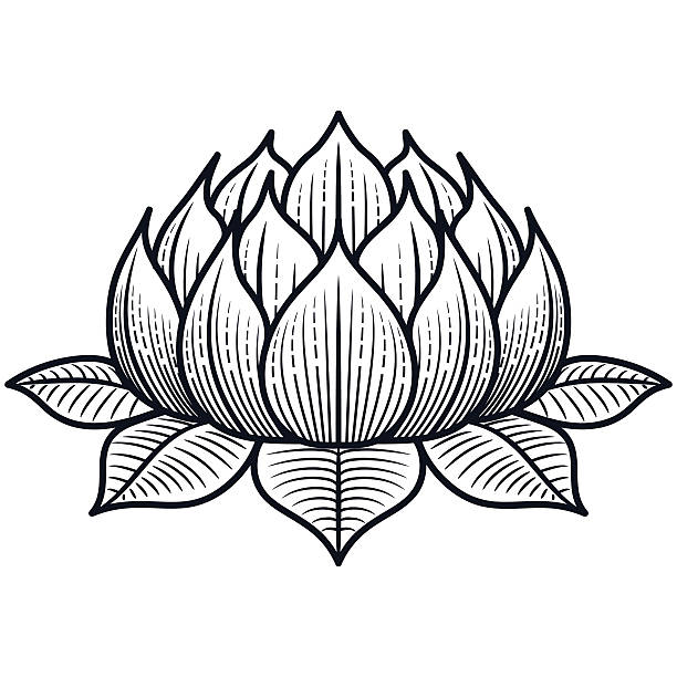 Top 60 Lotus Flower Clip Art Vector Graphics And Illustrations Istock