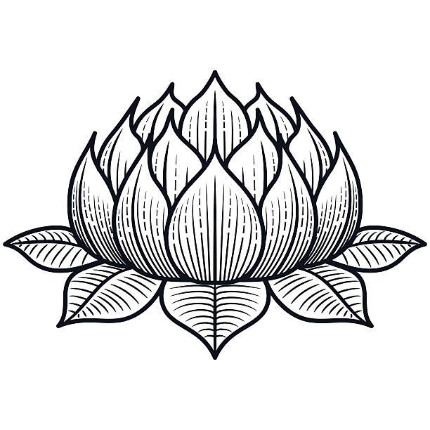 ilustraciones, imágenes clip art, dibujos animados e iconos de stock de flor de loto silueta de vector de ilustración - tatuajes de flores