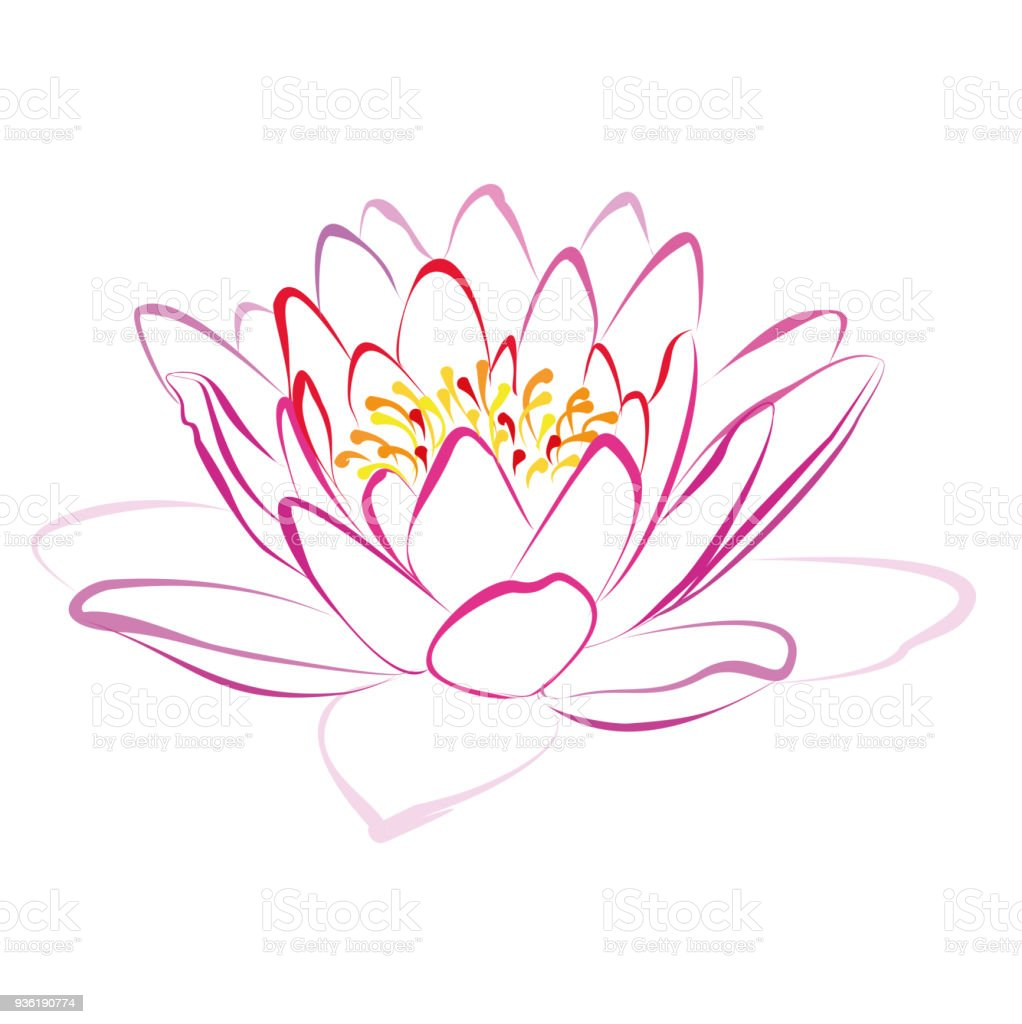 Lotus Flower Vector Drawing Stock Vector Art More Images Of