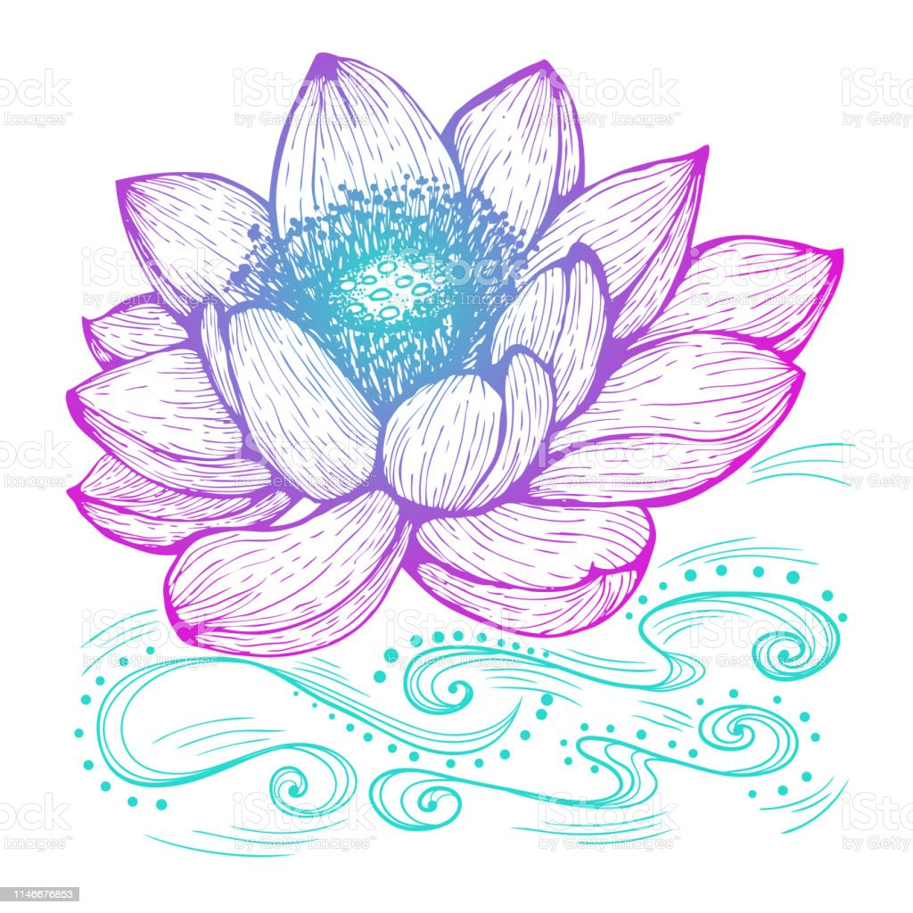 Lotus Flower Stock Illustration Download Image Now Istock