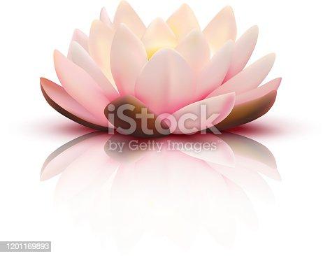 istock lotus flower 1201169893