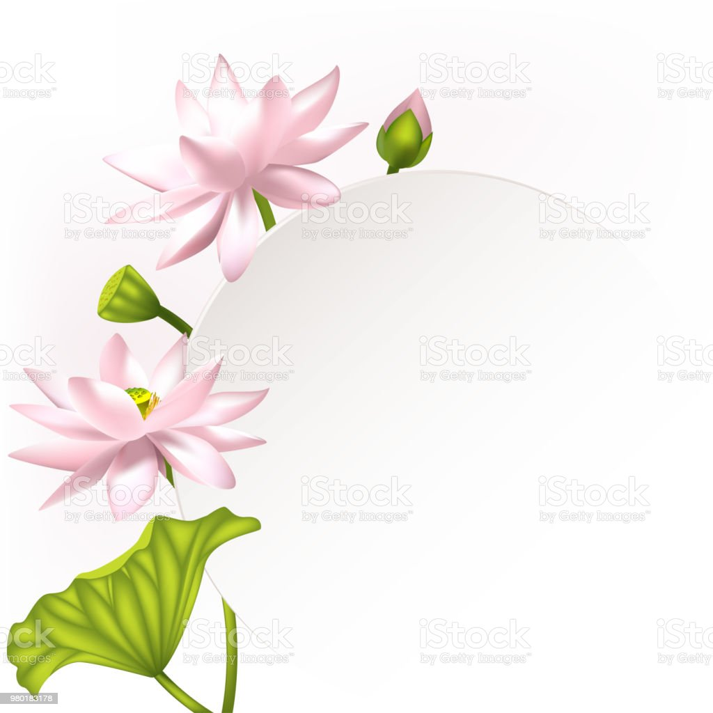 Lotus Flowers Floral Background Invitation Water Lily Buds Petals