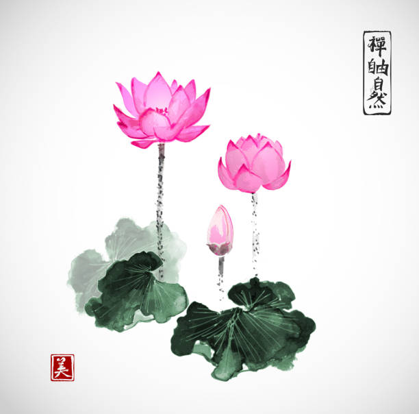872f76092 Top 60 Lotus Clip Art, Vector Graphics and Illustrations - iStock