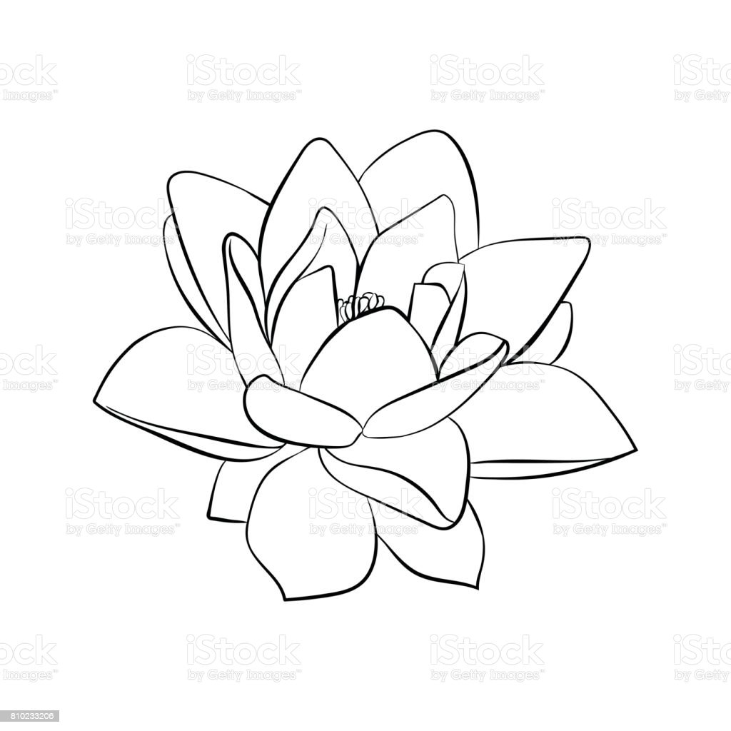 Lotus Flowers Icon Stock Vector Art More Images Of Abstract