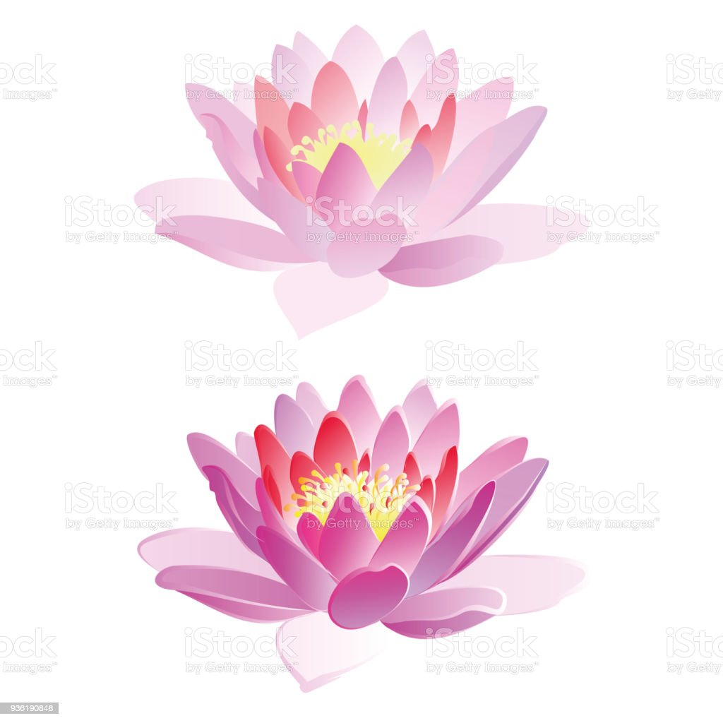 Lotus Flowers Vector Illustration Stock Vector Art More Images Of