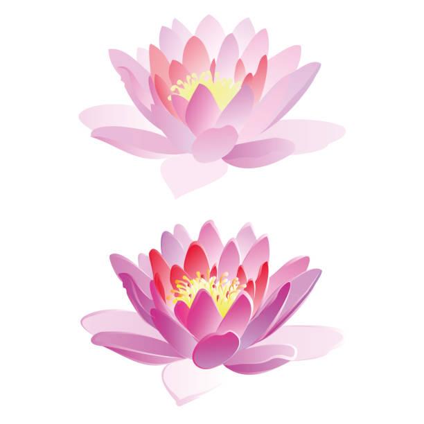 ilustrações, clipart, desenhos animados e ícones de flores de lótus, ilustração vetorial. - lotus