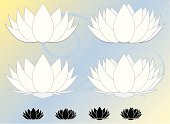 A set of beautiful, peaceful water lilies - aka lotus flowers (8 total)OPTIONAL background. Flowers in white with light gray edging and alternatively as icons in black with white edging.