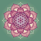 Rosy lotus mandala with a centered flower of life symbol on a green background. The flower of life is a geometrical figure, composed of multiple evenly-spaced, overlapping circles. It is a strong, ancient symbol and stands for various believes related to the sacred geometry and healing energies. The lotus symbolizes beauty, wisdom and blissful liberation by meditation.