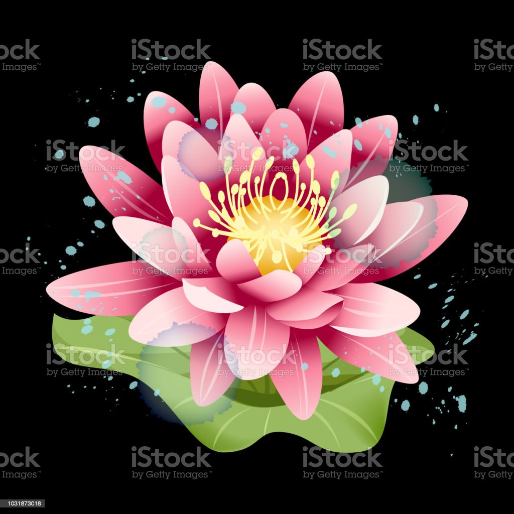 Lotus Pink Flower On The Black Background Stock Vector Art More