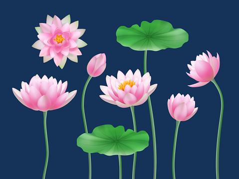 Lotus realistic buds. Nature colored flowers yoga symbols decent vector illustrations set