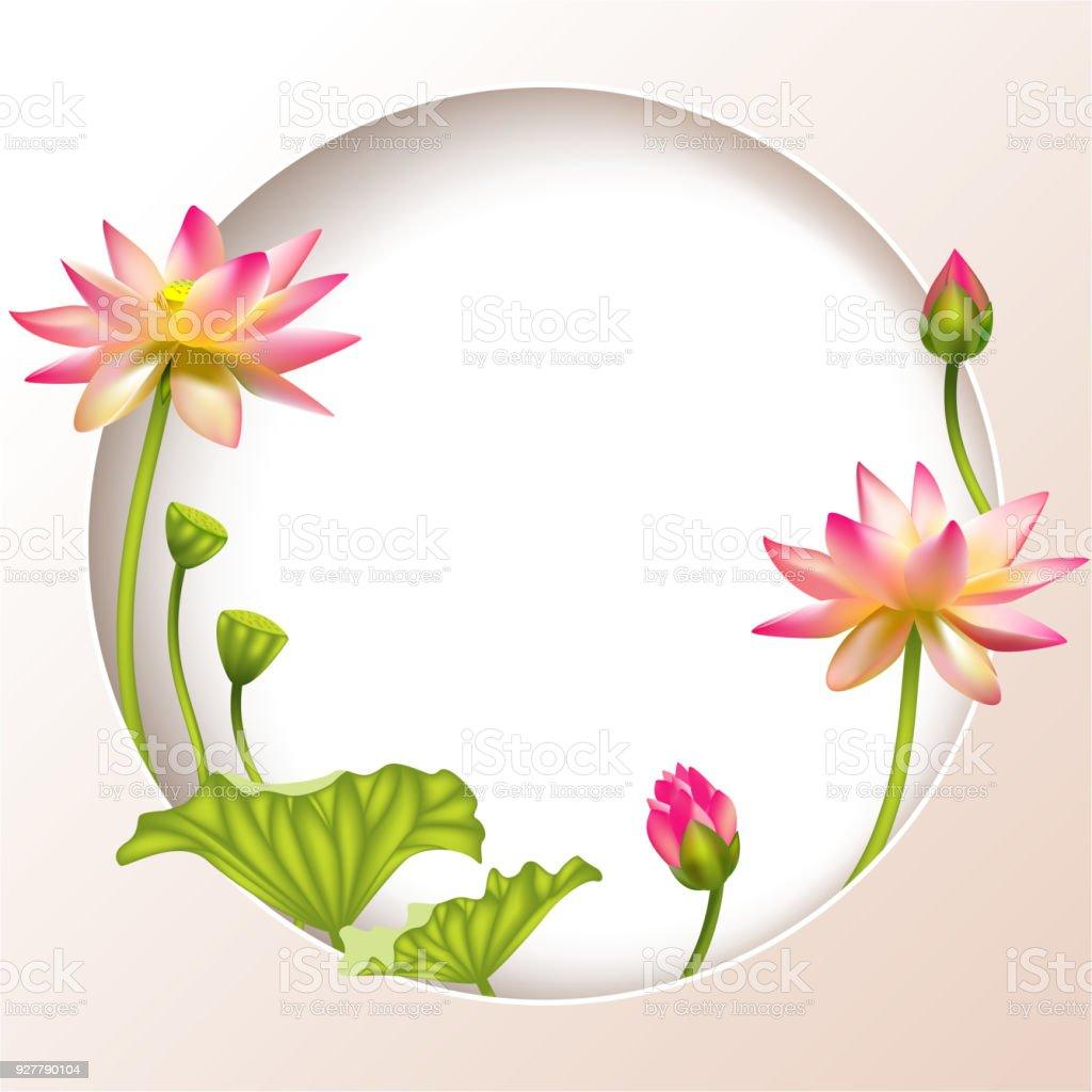 Lotus Tropical Flowers Water Lily Floral Background Pink Green ...