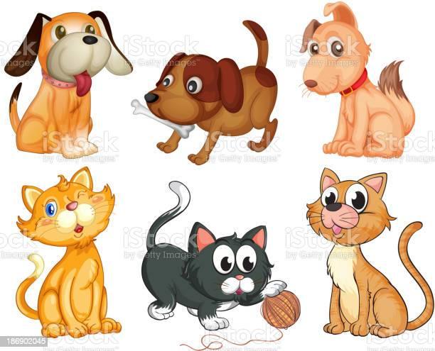 Lovable pets vector id186902045?b=1&k=6&m=186902045&s=612x612&h=pqdnfhpewloknk0 tnlcwbu3bh9dzknegkbtjtd96ne=